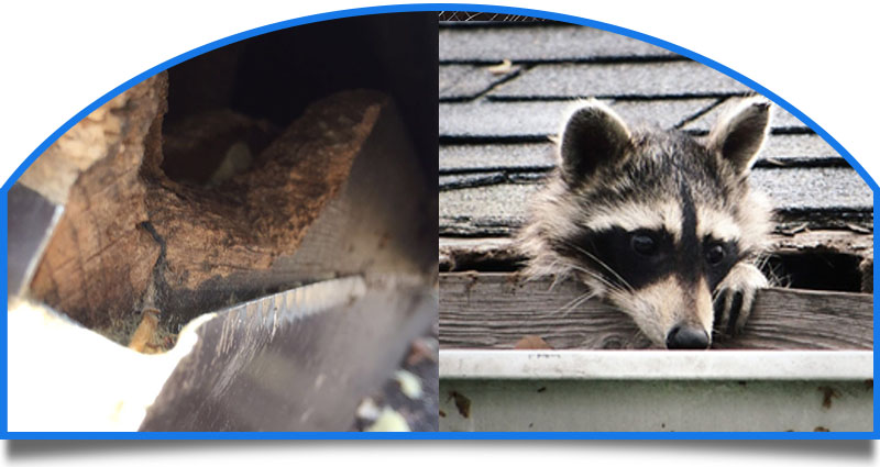 Rodent Proofing Services NJ PA Squirrels, Raccoons, Mice, Rats and